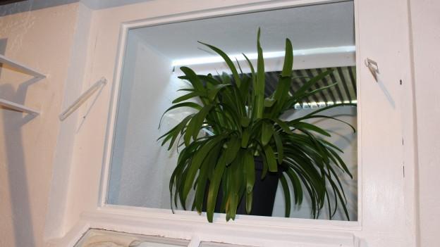 Ein Lichtschacht kann ein guter Lagerraum für Pflanzen sein.