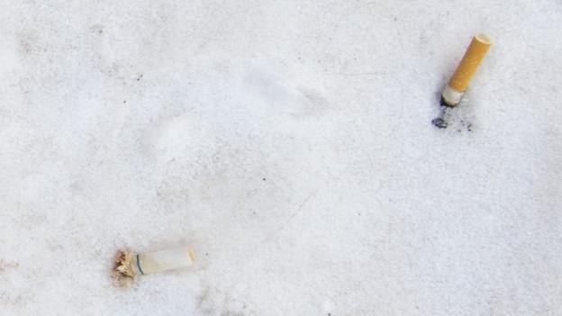 Zigistummel im Schnee.