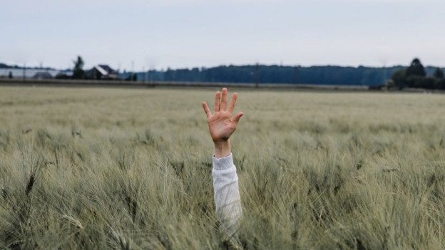 Hand streckt sich aus einem Getreidefeld