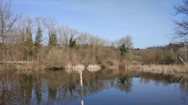 Naturschutzgebiet Auried – Heimat der Laubfröschen und Zugvögel.