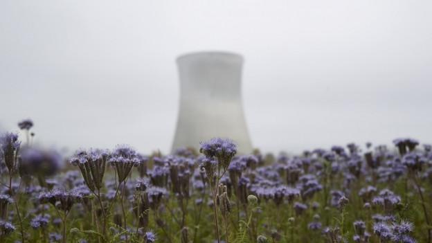 Ein Kühlturm eines AKW steht in einer Wiese mit Blumen