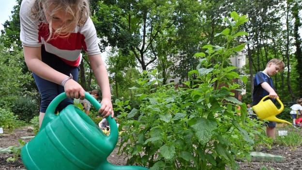 Blick in einen Garten mit Kindern, die Pflanzen giessen