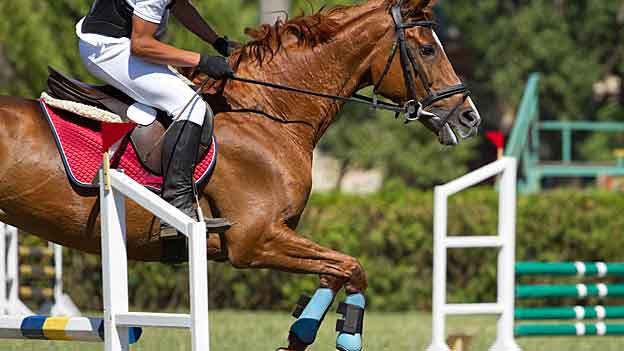 An einem Pferde-Concours