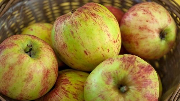 Der Gravensteiner ist eine uralte Sorte, die 1669 in Dänemark entdeckt wurde. Der Gravensteiner schmeckt am besten ausgereift direkt vom Baum.