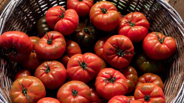 Klar, noch haben diese Tomaten nicht Saison - Aber wie heisst es doch so schön? Vorfreude ist die schönste Freude!