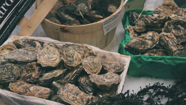 Frische Muscheln Kaufen