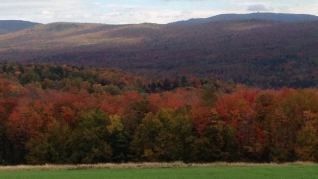 Herbstliches Waldgebiet von Burke im US-Bundesstaat Vermont.