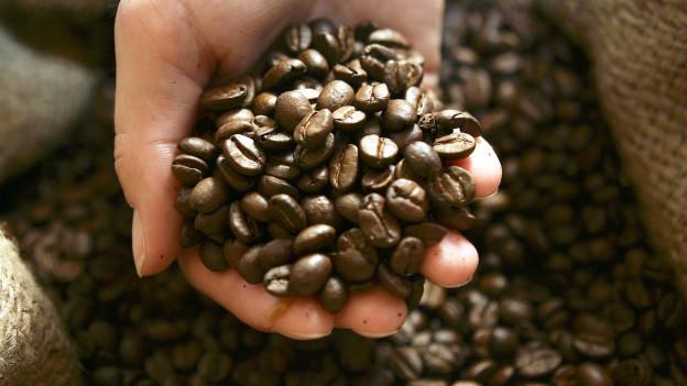 Kaffeebohnen in der Hand.