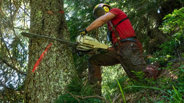 Ein Forstarbeiter sägt an einem Baum im Steilhang