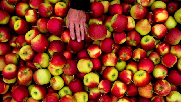 Ein Input wird praktisch nie argumentativ gestützt, sondern einfach auf den Tisch gelegt wie ein Apfel.