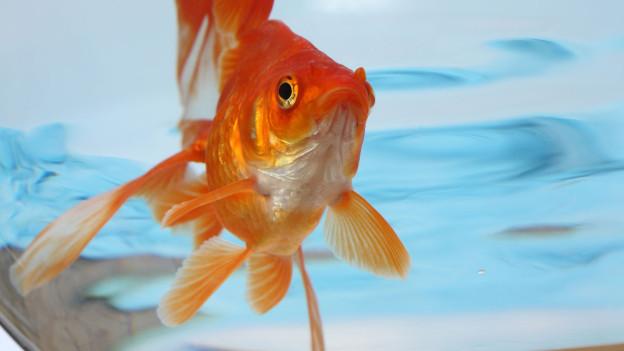 Stumm wie ein Fisch, sind manche Menschen.