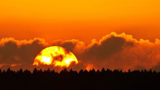 Die Sonne geht hinter einem Waldstück unter.