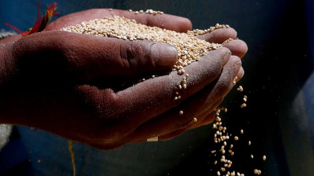 Mann hält Quinoa in der Hand.