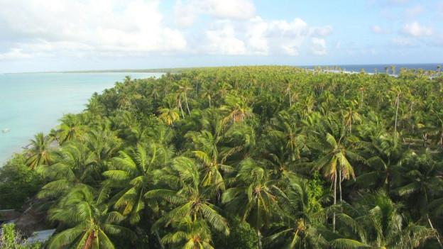 Palmen und Meer.