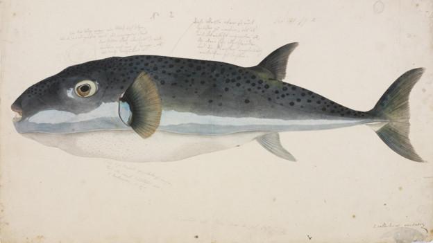 Aquarell eines Fisches