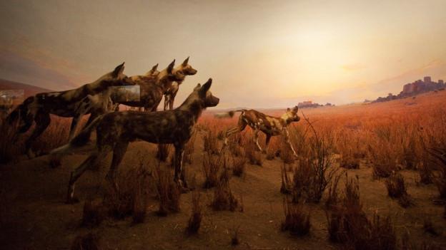 Hyänen in einer Steppenlandschaft.