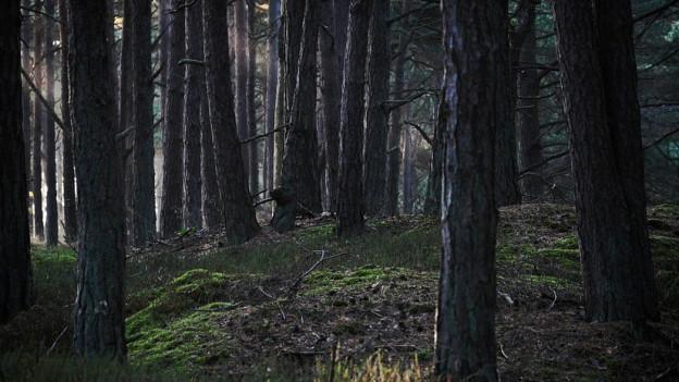 Der düstere Wald funktioniert nicht nur bei den Gebrüdern Grimm