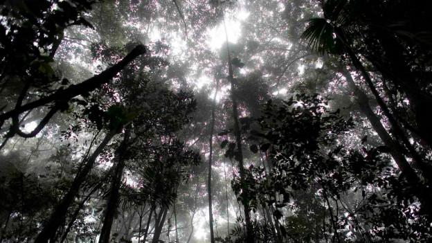 Ein Bild eines Waldes.