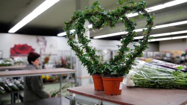 Eine zu einem Herz geformte Topfpflanze steht auf einem Wagen.