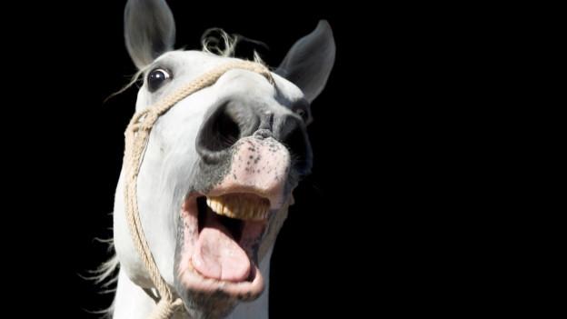 Ein Pferd wiehert.