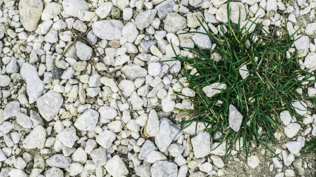 Ein Büschel Gras wächst auf einer Kiesfläche.