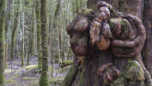 Ein Baumstamm mit einem Geschwulst