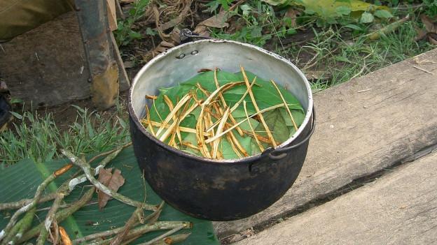 Ayahuasca-Zubereitung.