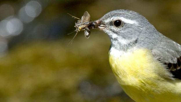 EIn Vogel frisst ein Insket.