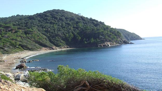 Eine grüne Küstenlandschaft.
