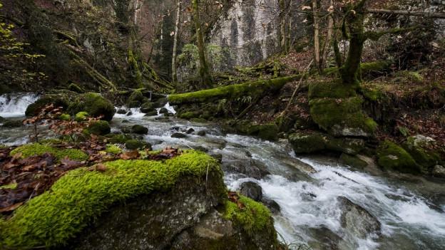 Ein Bild des Waldes GORGES DE COVATANNAZ.