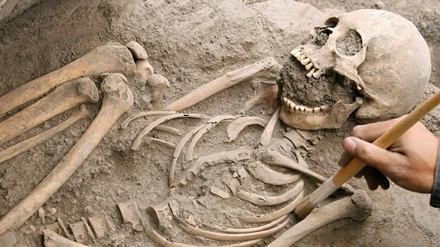 Blick in eine archäologische Grabung mit Skelett.