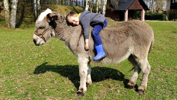Ein Esel, auf dessen Rücken liegt ein Junge.