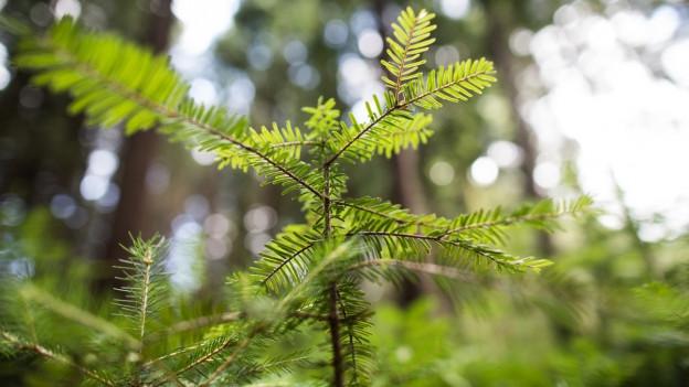 Der Wald als Lebensraum