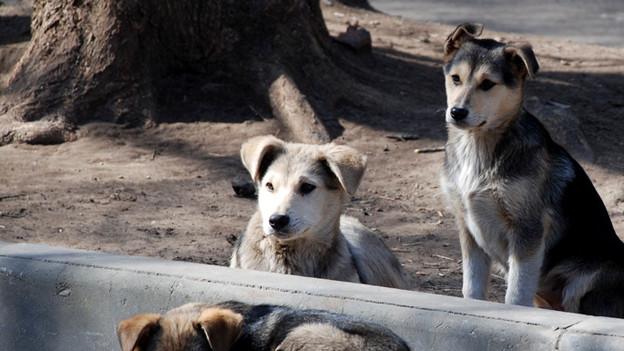 Hunde auf der Strasse.