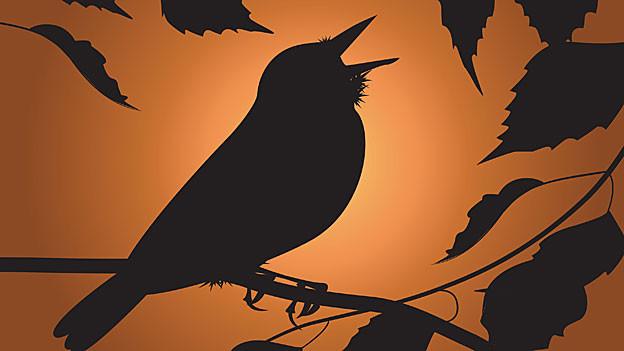 Singende Nachtigall sitzt auf einem Ast