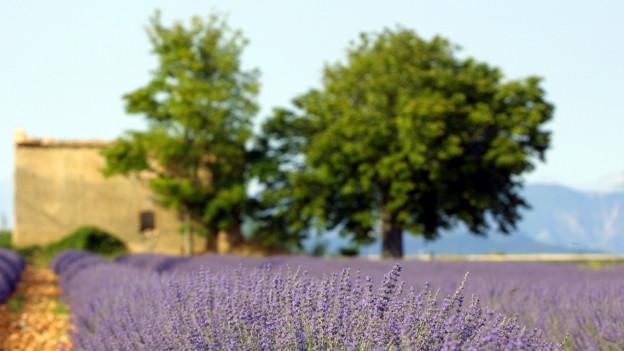 Schauplatz von Pagnols Geschichten: Die Provence.