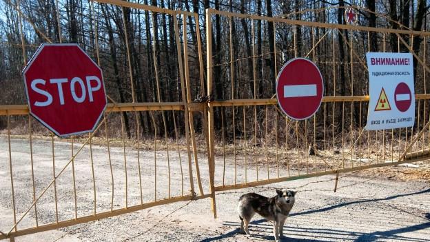 Ein Hund steht vor dem Eingangstor der Schutzzone um Tschernobyl.
