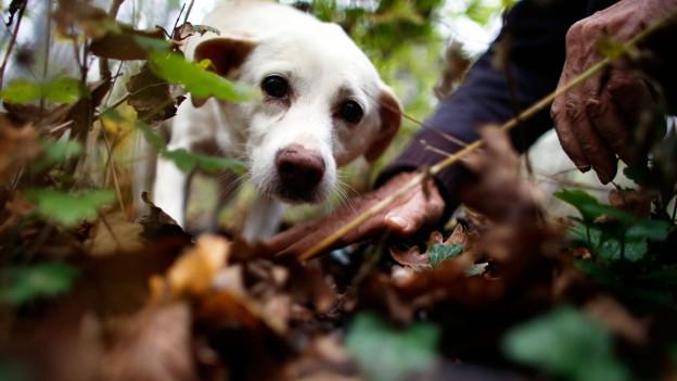 Symbolbild: Nahaufnahme von Hund im Wald