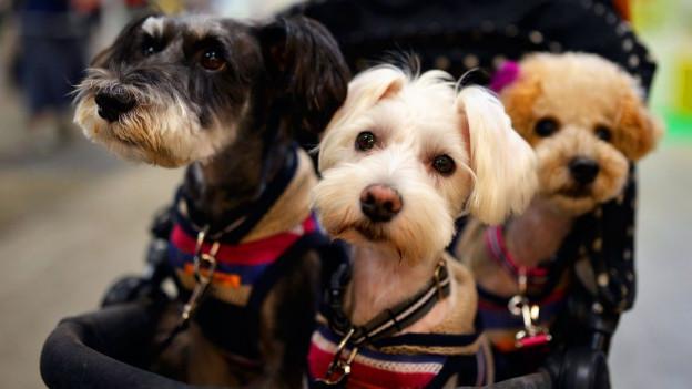 Symbolbild: Drei Hunde