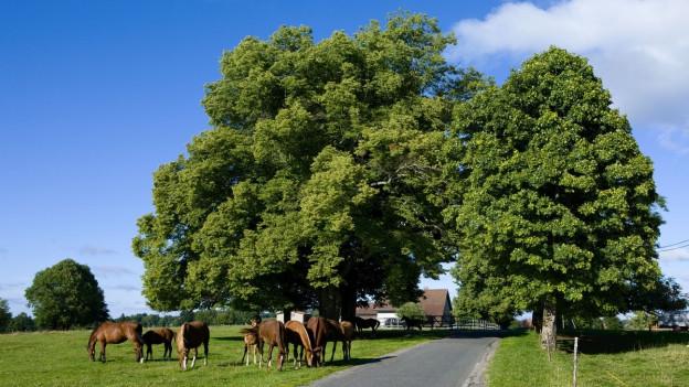 Pferde vor einem Hof im Jura.