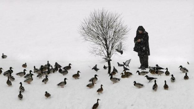 Erzählt von einer Biografie mit Karriereknick: «Der Entenfreund».