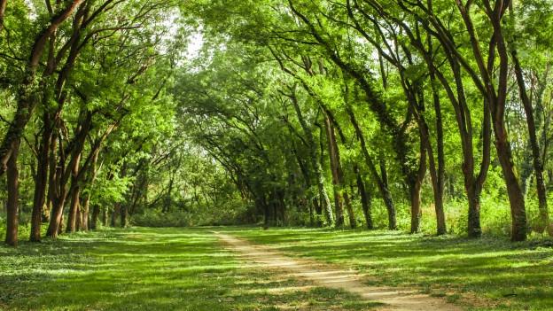 Ein Laubwald im Sommer