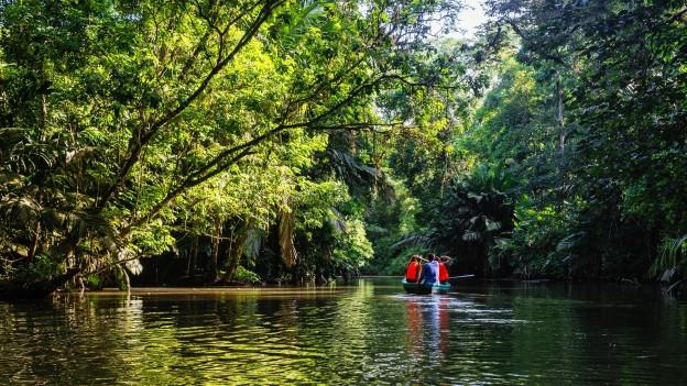 Foto von einem Fluss im brasilianischen Urwald