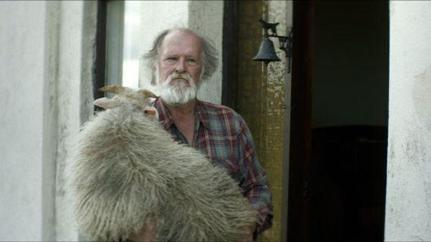 Ein Schaf und ein sturer Bock: der isländische Film «Rams»