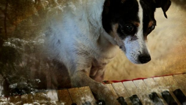Lolabelle in «Heart of a Dog» von Laurie Anderson