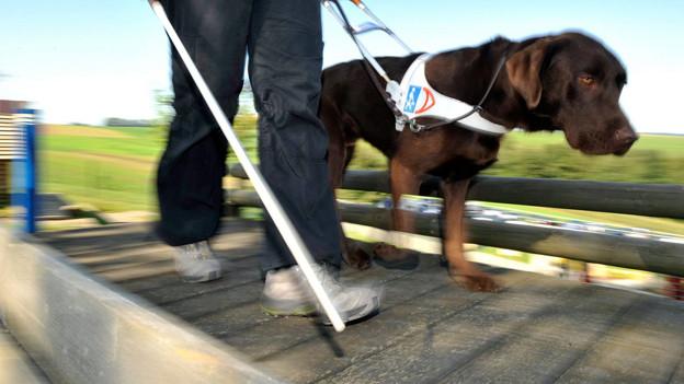 Ein Blindenhund mit Herrchen.