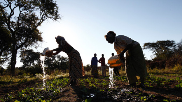 Die Landwirtschaft macht keinen reich in Sambia. Trotz fruchtbaren Böden und jahrelanger Entwicklungshilfe.