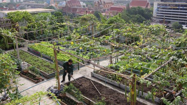 Urban Farming - egal wo