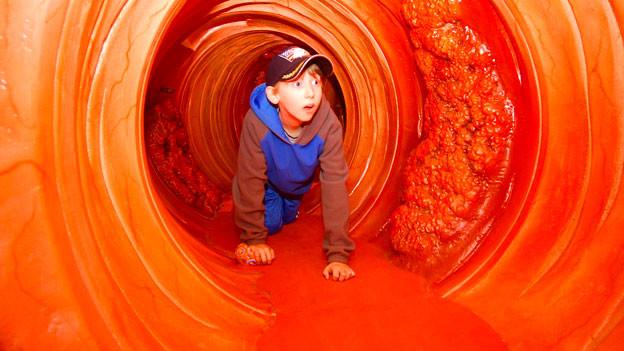 Ein Junge kriecht an einer Gesundheitsmesse in den USA durch ein Riesendarm-Modell.