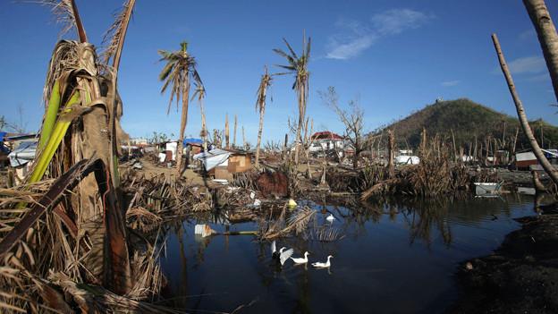Auch einen Monat später sind die Spuren des Taifuns auf den Philippinen nicht zu übersehen.